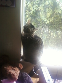 Sassy Pooh in the window looking at me.
